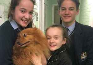 News video: Family Overcome With Emotion as They're Reunited With Stolen Dog