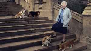 News video: Super sad news out of Buckingham Palace today — The Queen's last royal corgi has died