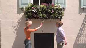 News video: Exploring the Majestic Floral Arrangements of Downtown Charleston