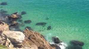 News video: Huge great white chases seals in South African bay
