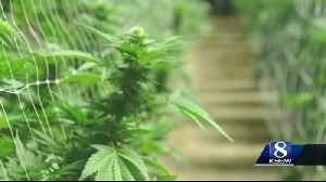 News video: Monterey County could rival the 'Emerald Triangle'