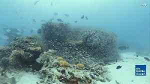 News video: Coral Die-off Changing Great Barrier Reef