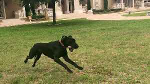 News video: Adopted Pup Experiences Her First Run Off Leash And It Is Beautiful