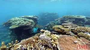 News video: Extreme Heatwaves Killed Half of the Great Barrier Reef's Coral in 2 Years, Study Says