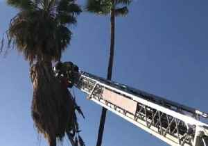 News video: Tucson Firefighters Stage Daring Rescue of Man Trapped in Palm Tree