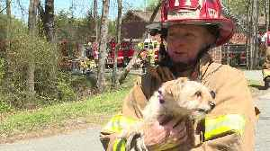 News video: Firefighter Saves Dog from Fire the Day After Losing Her Own Dog to Cancer
