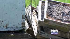 News video: Keeping the Bees Alive