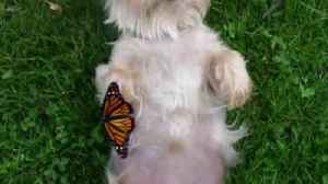 """News video: """"An Unlikely Friendship Between A Dog And A Butterfly"""""""