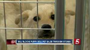News video: Bill Would Penalize Stores For Selling Animals From Abusive Backgrounds