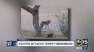 News video: Several Valley dogs have been attacked by coyotes right in their backyards recently