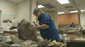 News video: Scientists Thrilled by Major Fossil Find in Santa Clara County