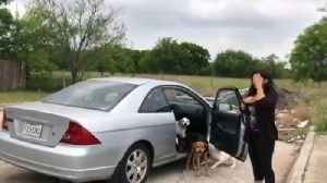 News video: Video Shows Woman Abandoning Dogs on Texas Street Before Driving Off