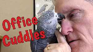 News video: Parrot And Owner Share Incredibly Trusting Relationship