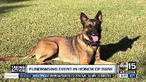 News video: Phoenix Police Foundation holding fundraiser for K-9 Unit in honor of Bane