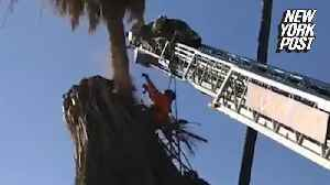 News video: Tree trimmer nearly plummets to his death