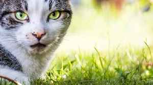News video: Disneyland Home To Hundreds Of Feral 'Cat Members'