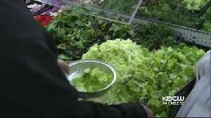News video: Health Officials Warn Against Eating Romaine Lettuce from Southwest U.S.