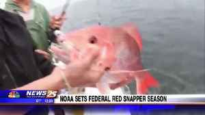 News video: NOAA sets federal red snapper season