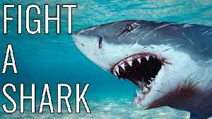 News video: How To Fight A Shark - EPIC HOW TO