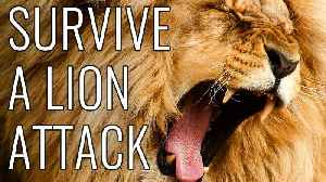 News video: Survive A Lion Attack - EPIC HOW TO