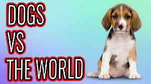 News video: Make It Happen Monday: Dogs Vs The World
