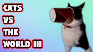 News video: Cats vs The World III - Breaking Videos