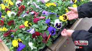 News video: Weather delaying spring flowers