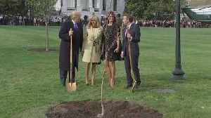 News video: Trump, Macron plant a tree at the White House to begin state visit