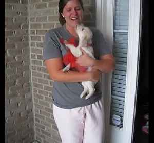 News video: Woman in tears after new puppy surprise