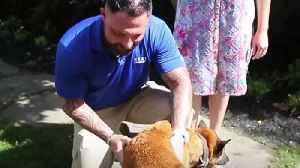 News video: Staff sergeant's emotional reunion with his best friend