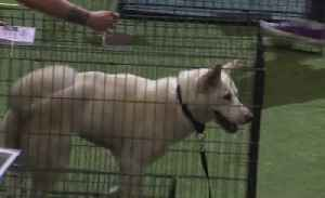News video: Animal Foundation host 15th annual Best in Show