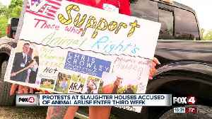 News video: Animal activists say their not backing down