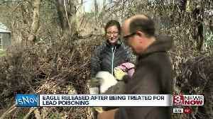 News video: Rehabilitated bald eagle released at Pioneer Trails