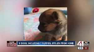 News video: 7 puppies, 2 dogs reported stolen from Blue Springs home