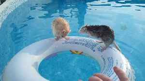 News video: These Two Rats Really Are Expert Swimmers