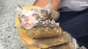 News video: Kitten Rescued From Car Engine
