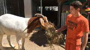 News video: The Prison Inmates Who Run A Zoo