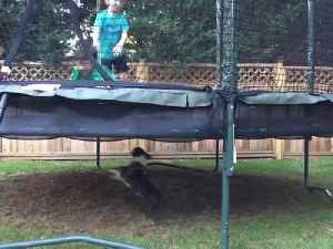 News video: Two Boys Jump On A Trampoline And A Dog Runs Under