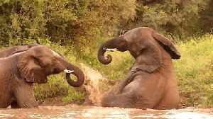 Clumsy Elephant Makes Unsuccessful Attempt To Get Out Of Water