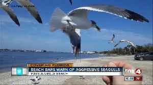 News video: Beach restaurants warn of extra-hungry seagulls who will swarm kids trying to feed them