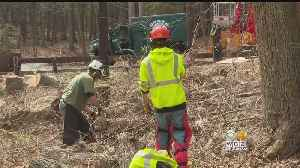 Tree Companies Clean Up Boy Scout Camp Hit Hard By Winter Storms