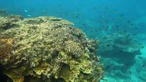 News video: Australia to Spend $379M to Save Great Barrier Reef