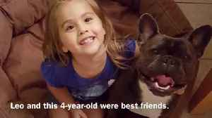 News video: French Bulldog Mauled To Death In Owner's Yard
