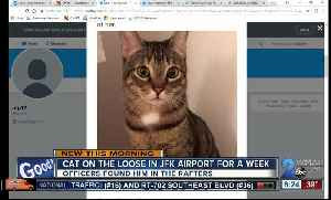 News video: Cat caught after running loose in JFK for a week