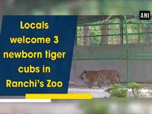 News video: Locals welcome 3 newborn tiger cubs in Ranchi's Zoo