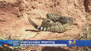 News video: Hikers Warned Of Rattlesnakes Emerging As Temperatures Warm