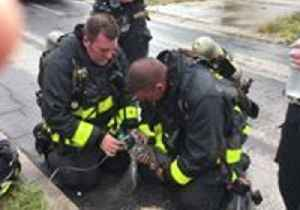 News video: Florida Firefighters Revive Kitten Rescued From House Fire