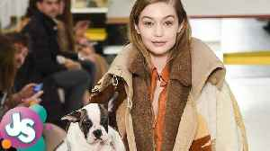 News video: Fans PISSED at Gigi Hadid & Models Using Dogs as Runway Accessories During Fashion Show -JS