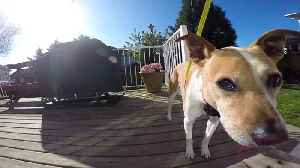 News video: Dog sees hidden camera , she deals with it in her own way