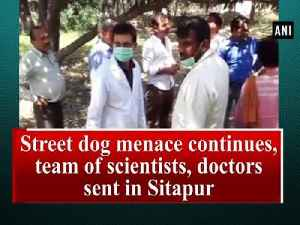 News video: Street dog menace continues, team of scientists, doctors sent in Sitapur